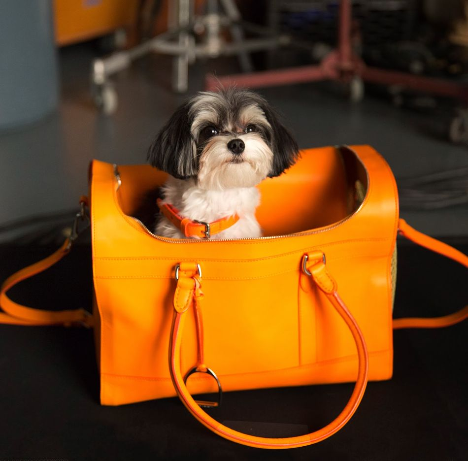 Video Exclusive: The Dog Walk Initiative by Ralph Lauren