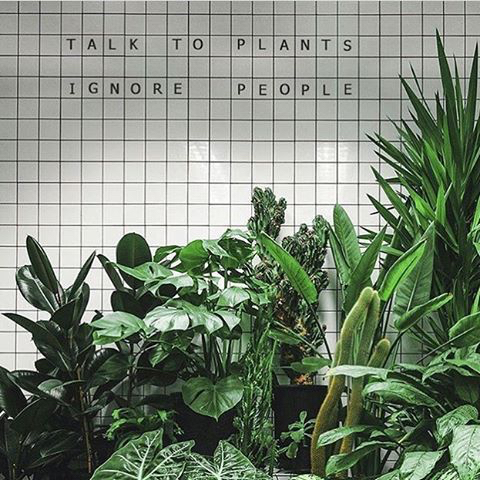 talk to plants greenery pantone