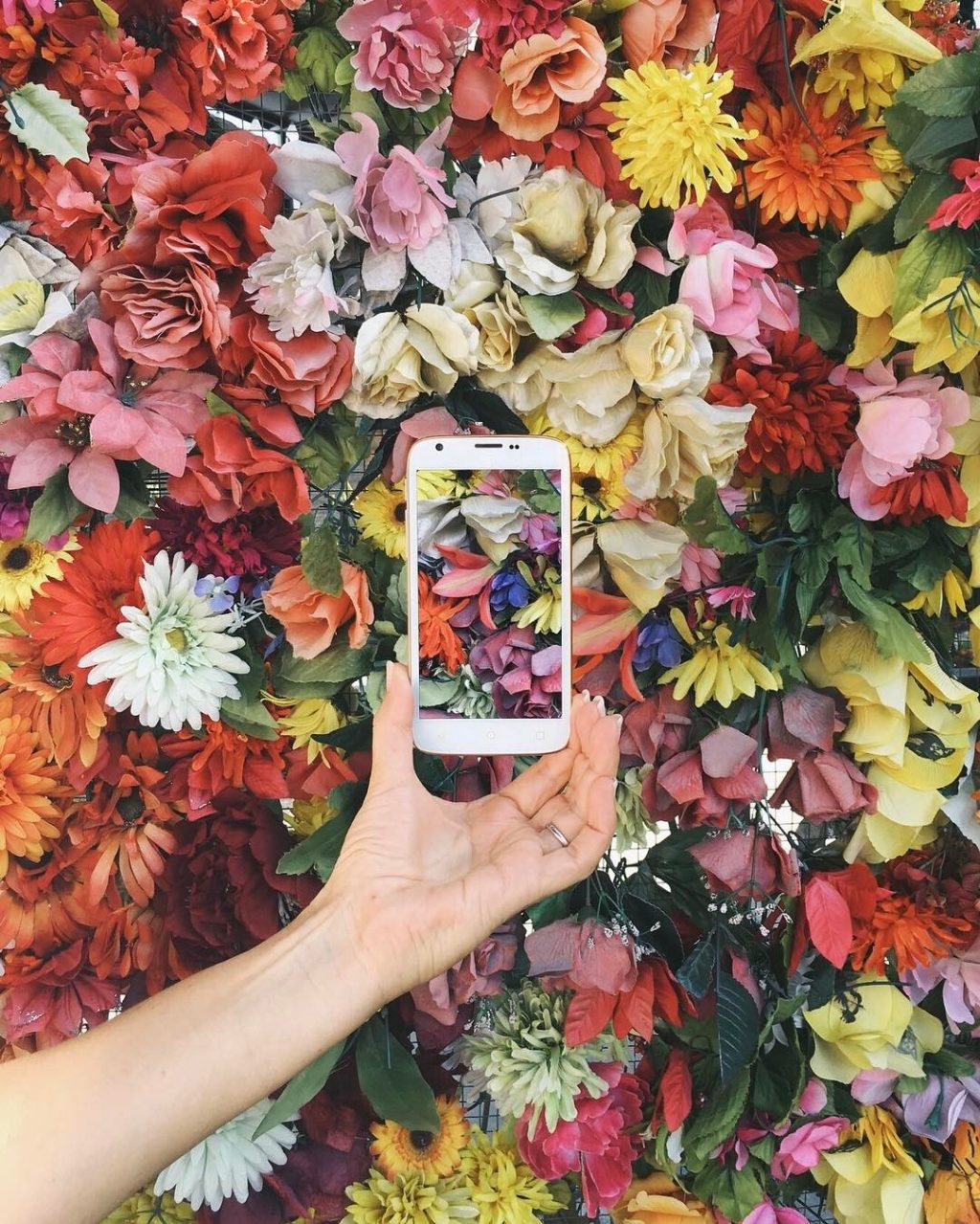 multi colored flowers hand holding cell phone