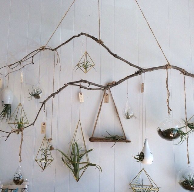 Indestructible indoor plants air plants
