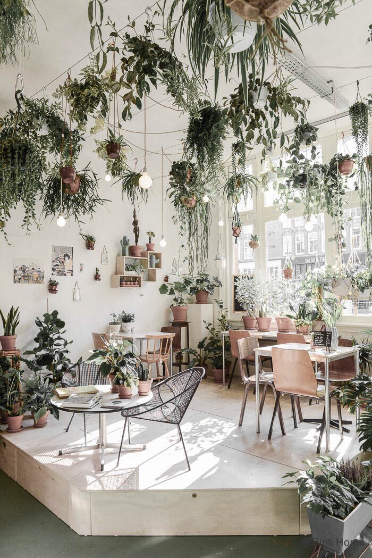 Indestructible indoor plants interiors