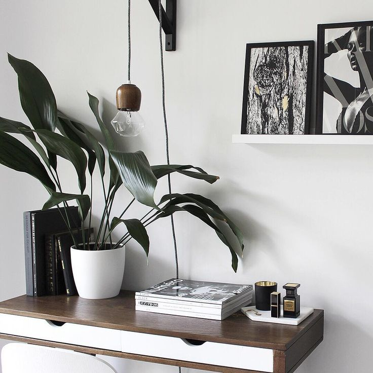 Indoor cast iron house plant