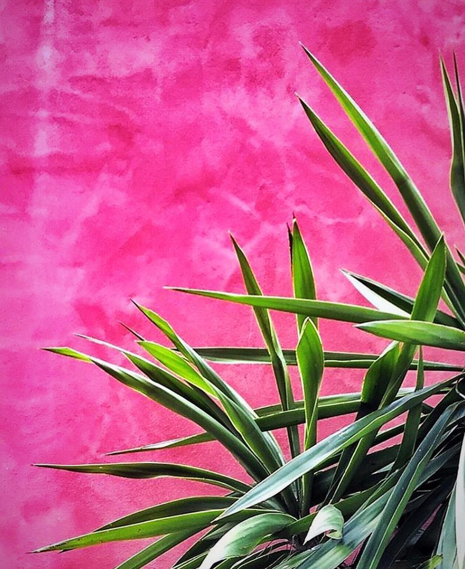 plants on pink instagr trend pink wall