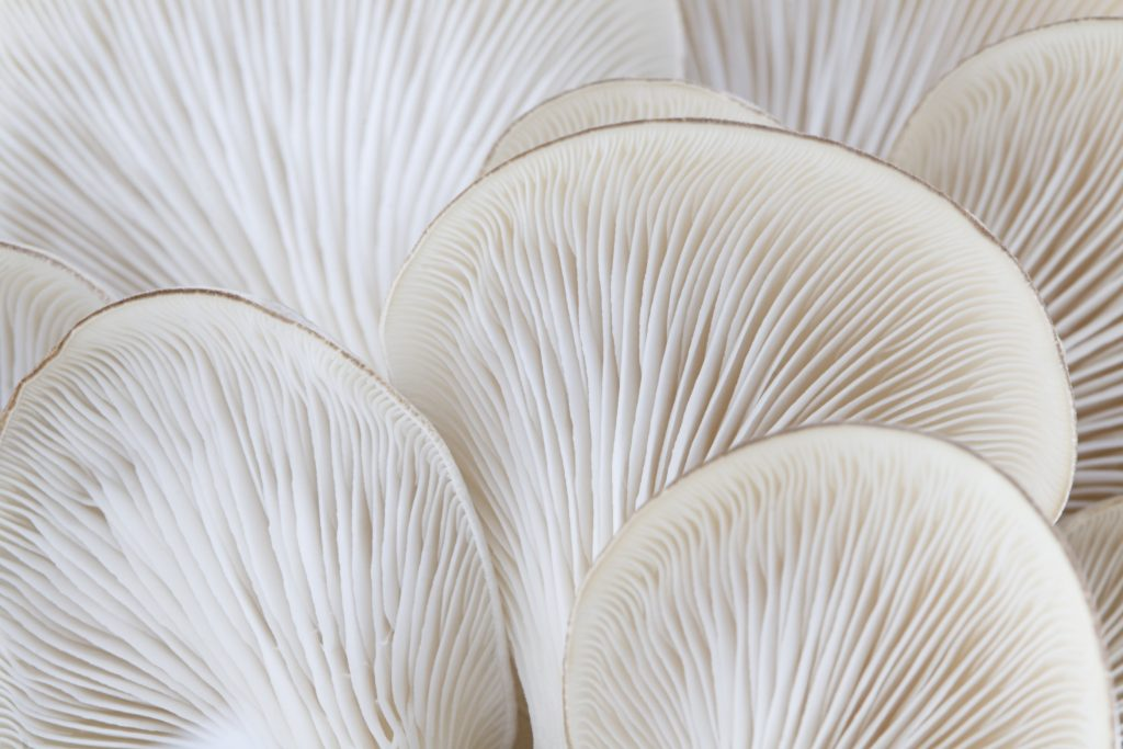 Magic Mushrooms: How Fungi Can Work Wonders for Your Face