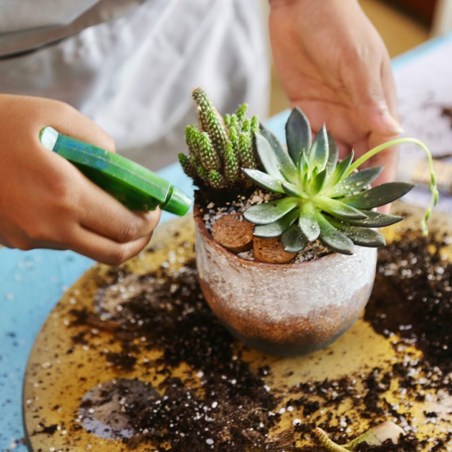 succulent workshop plant