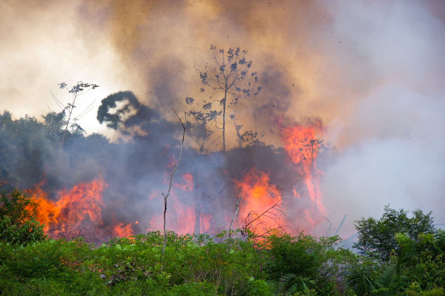 Brazilian Amazon Forest burning to open space for pasture (iStock/PA)