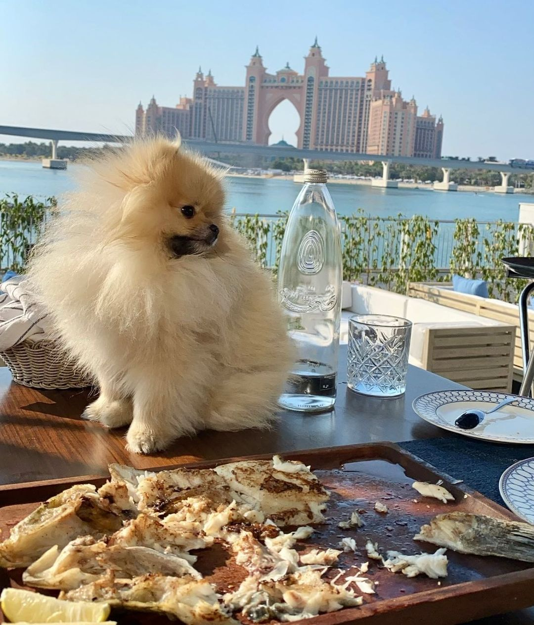 dubai pet friendly